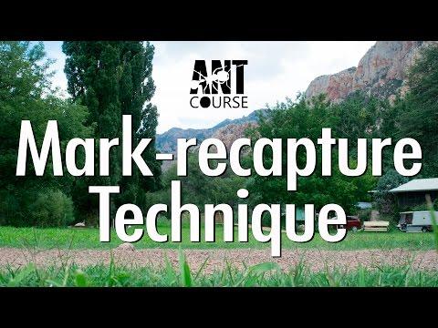 Ant Course Presents: Mark-recapture Technique