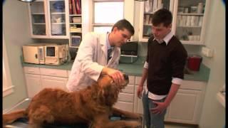 Senior Dog Vet Exam