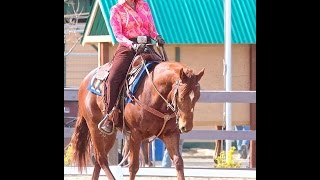Western Dressage Clinic Norco  WDA Kathleen Elliott Learn Traditional Dressage New Tests 2015