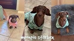 Moonpie Starbox TikTok Compilations For April 2020