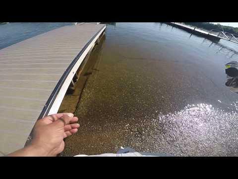 Free Crappie Minnows ( Lake Bowen)