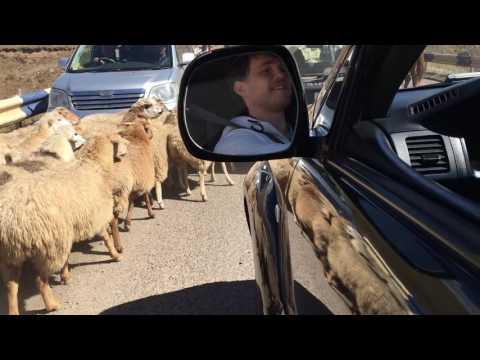 Горная дорога Армении и стадо овец