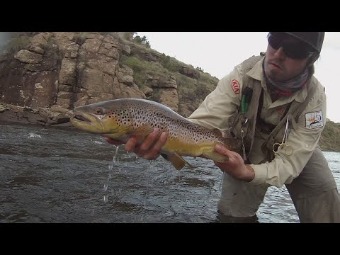 Catching Monster Brown Trout within the Lesotho Mountain Kingdom