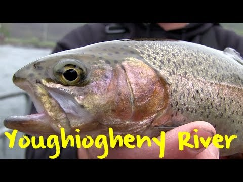 Youghiogheny River Trout Fishing
