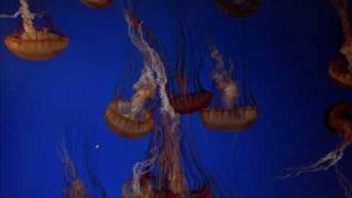 The Living Sea (IMAX) HD 1080p Trailer