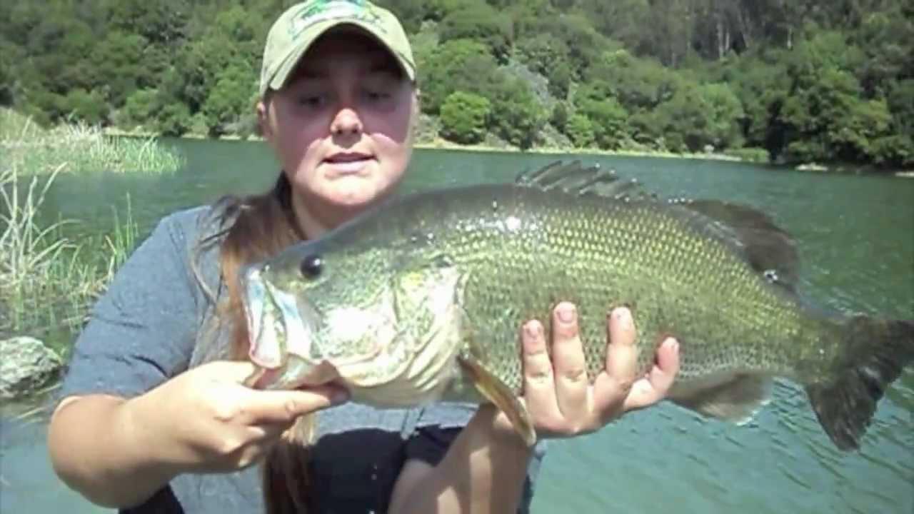 Whopper largemouth bass caught at lake chabot by for Lake chabot fishing