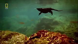 видео Примеры ароморфозов