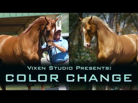 Vixen Studio: Horse Coat Color Change Tutorial