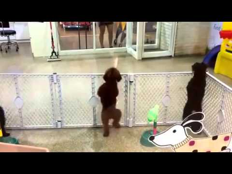 [LOL] Funny Disco Dog Dancing