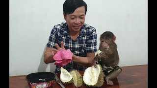 Baby Monkey | Monkey Doo Eats Durian With His Daddy