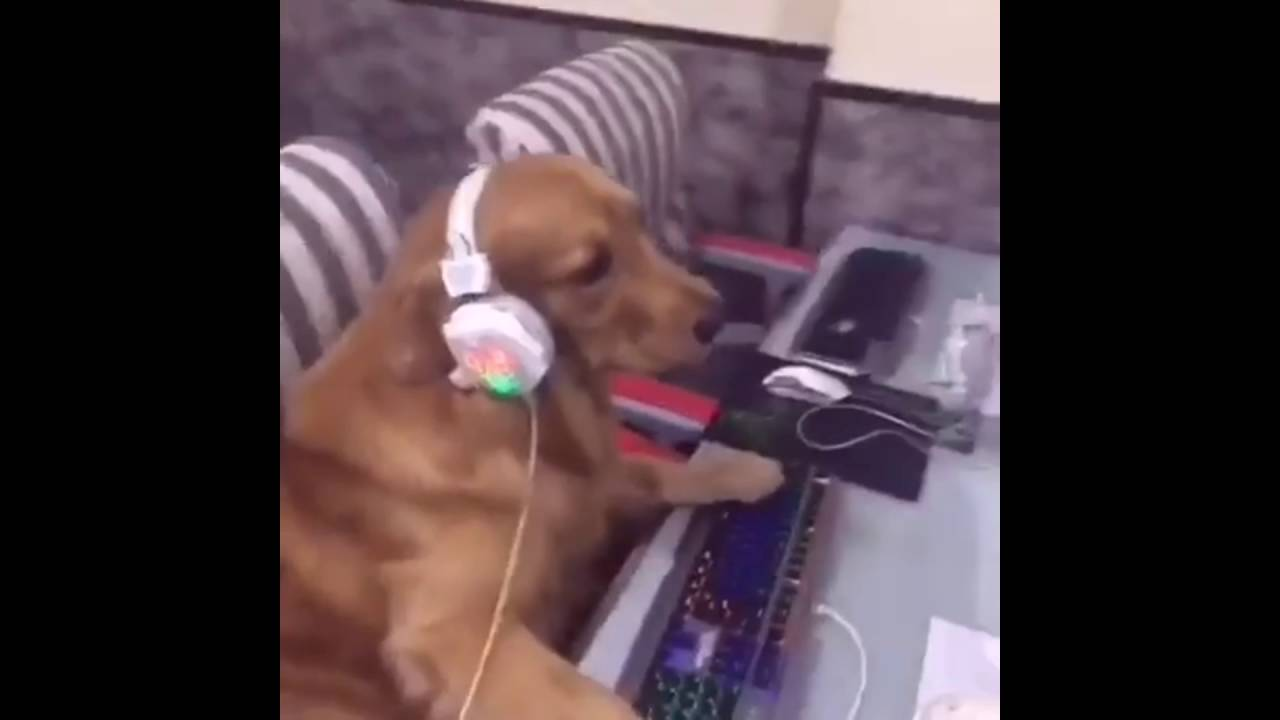 Dog Plays Video Games