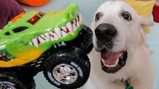 funny-dog-vs-crocodile-truck-cute-golden-retriever-bailey