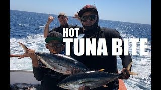 Hot Tuna Bite | Vendetta Sport Fishing
