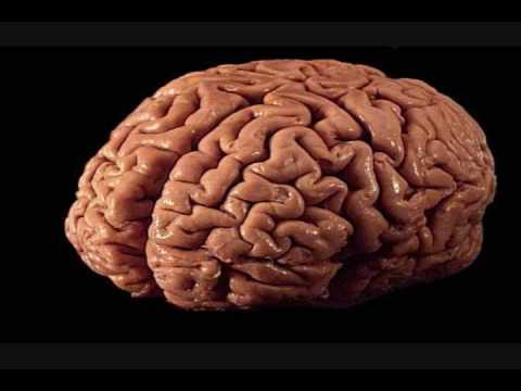 va tv 8 homeless man eats real brain   youtube