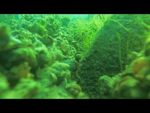 Бердянск. Подводный  мир азовского моря. Глубина 4 метра