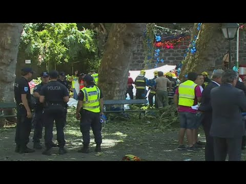 Falling tree kills 12 and injures 52 in Madeira