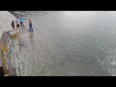 Amazing Scenes Of Mackerel Breaking In Youghal, Co  Cork