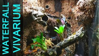 poison dart frog room tour