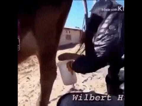 Насрала в молоко