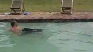 Staffy Swimming