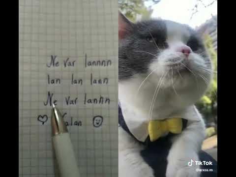 İnsan Gibi Konuşan Kedi - Davut Diyen Kedi