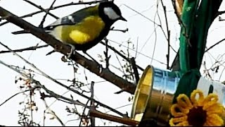 How To Make A Bird Feeder From A Tin Can With A Little Help From Your Dog:) A Simple Upcycling Idea.