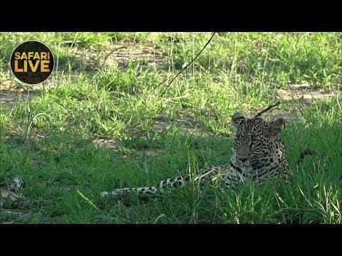 safariLIVE - Sunset Safari - January 4, 2019