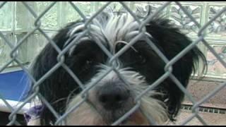 Saving Animals' Lives: A Look Inside the Pennsylvania SPCA
