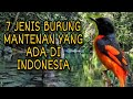 Jenis Burung Mantenan Yang Ada Di Indonesia  Mp3 - Mp4 Download