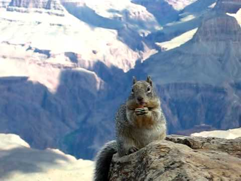 Hungry Grand Canyon Squirrel