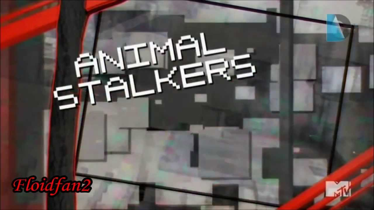 Ridiculousness Animal Stalkers & Cats are Weird YouTube