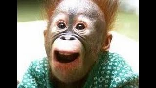 Подборка приколов с обезьянами NEW!!! Смотреть всем!!!