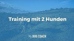 Training mit 2 Hunden richtig gestalten |My DogCoach