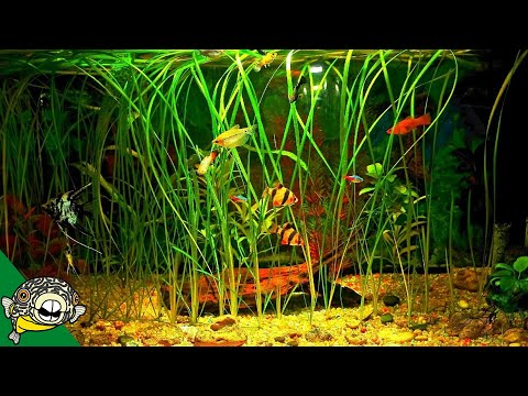 How To Grow Fish Tank Plants- Aquarium Co-Op