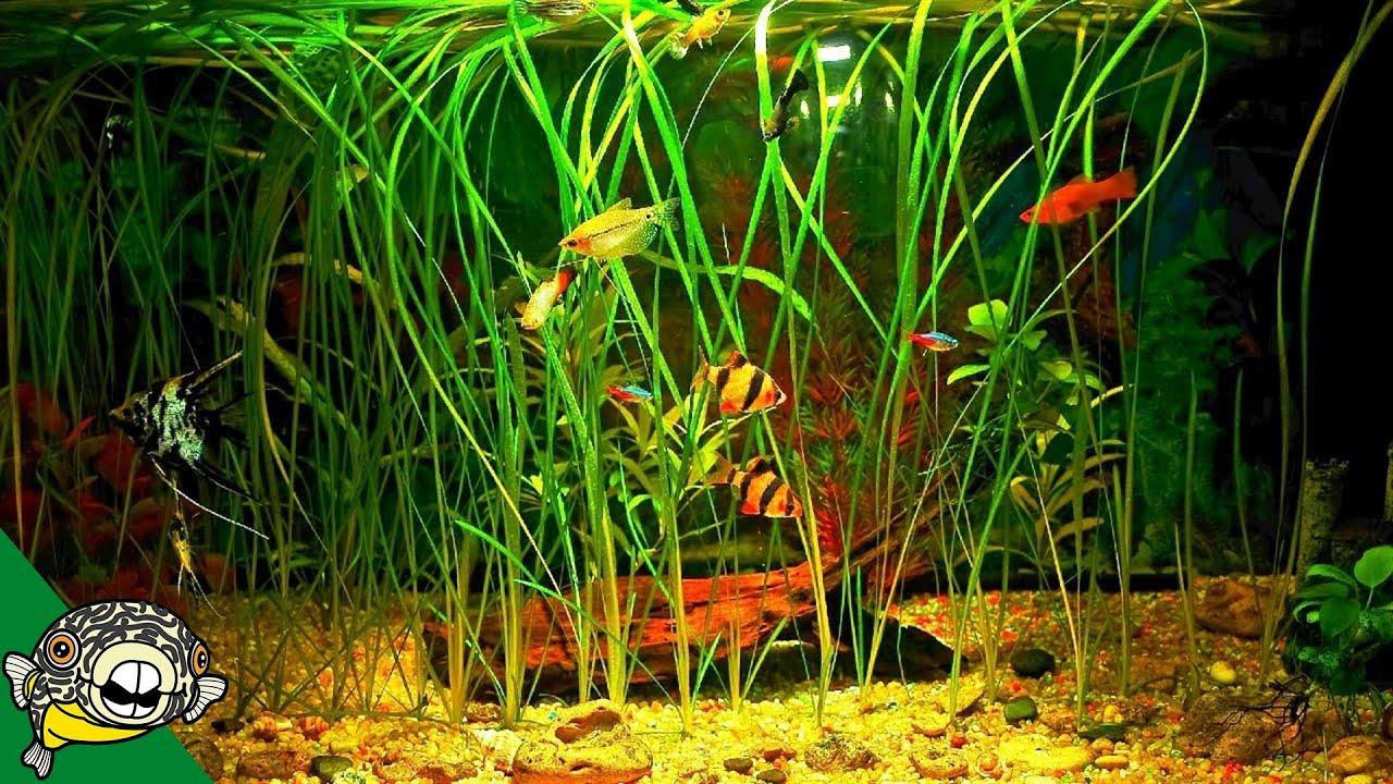 how-to-grow-fish-tank-plants-aquarium-co-op
