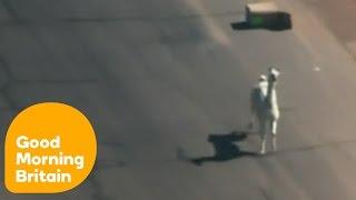 llamas escape onto american streets   good morning britain