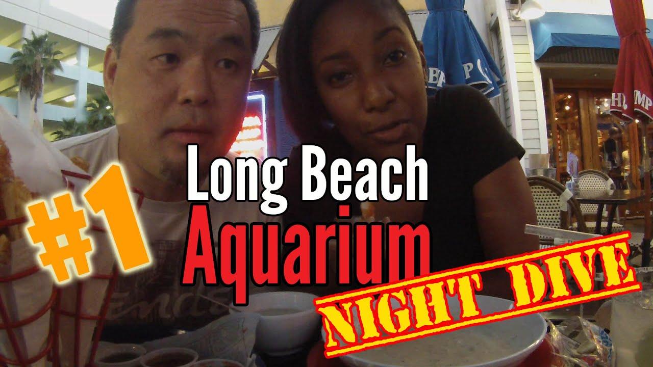 Long Beach Aquarium Night Dive Vlog 1