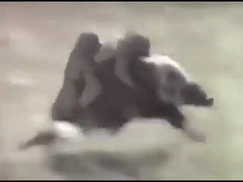 87+ Gambar Babi Dan Monyet Paling Keren