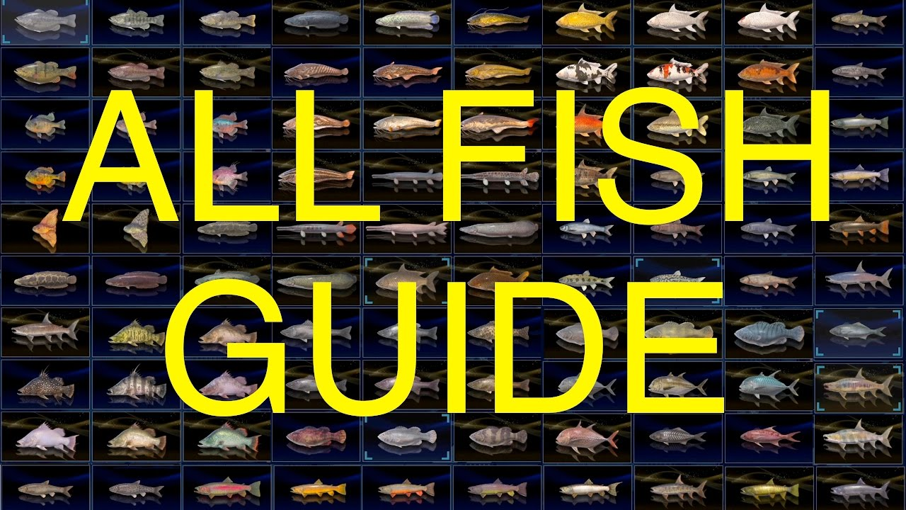 final fantasy xv all fish guide 100 complete youtube