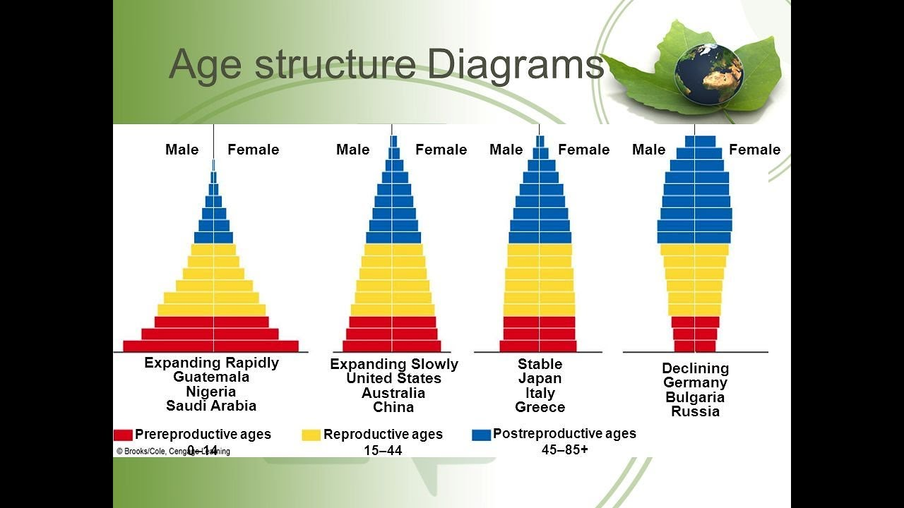 hight resolution of population age structure and population pyramid