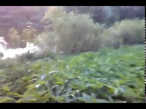 Океанариум. Курск. МегаГринн - YouTube