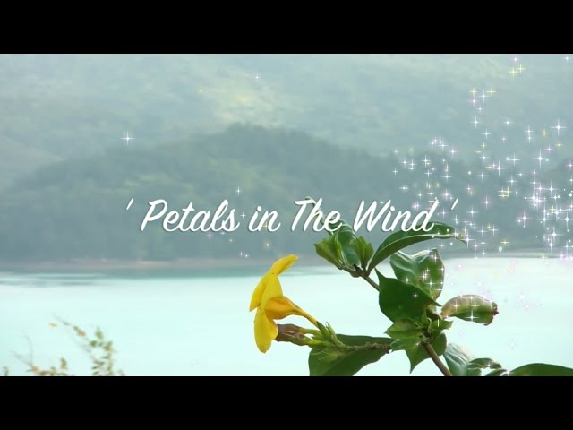 Petals in the Wind (Official Music Video)