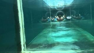 Going Down Serpent Slide at Atlantis (Bahamas)