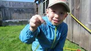 видео гусеница мохнатая