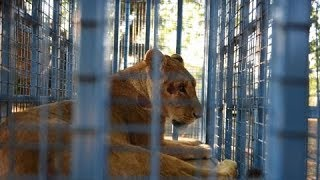Animals rescued from war-torn amusement park in Aleppo