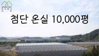 한국 10,000평의 최첨단 온실 구축 과정|스마트팜|…