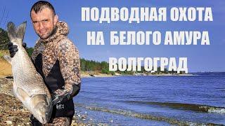 Подводная охота в Волгограде летом