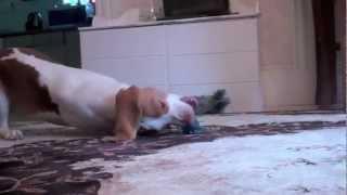動物って面白いですね 元動画 http://www.youtube.com/watch?v=xYz0qjwC...