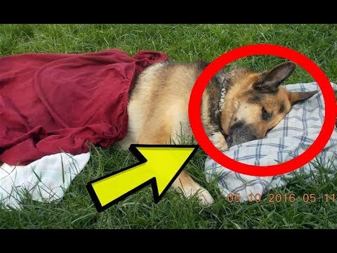 Dying Dog Loses Will To Live – Then Stranger's Act Makes All The Difference!