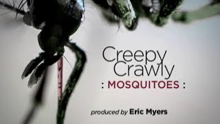 Creepy Crawly Mosquitoes